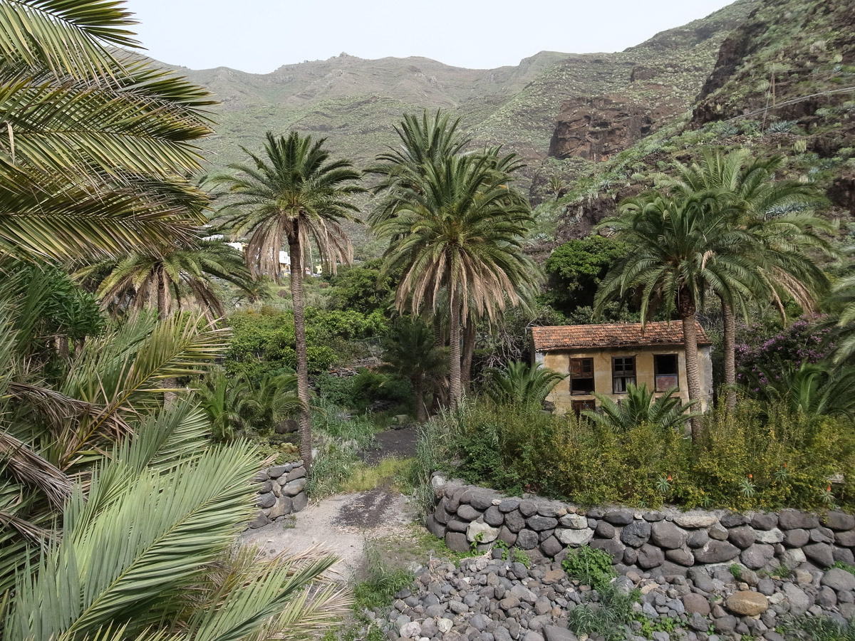 Haus unter Palmen