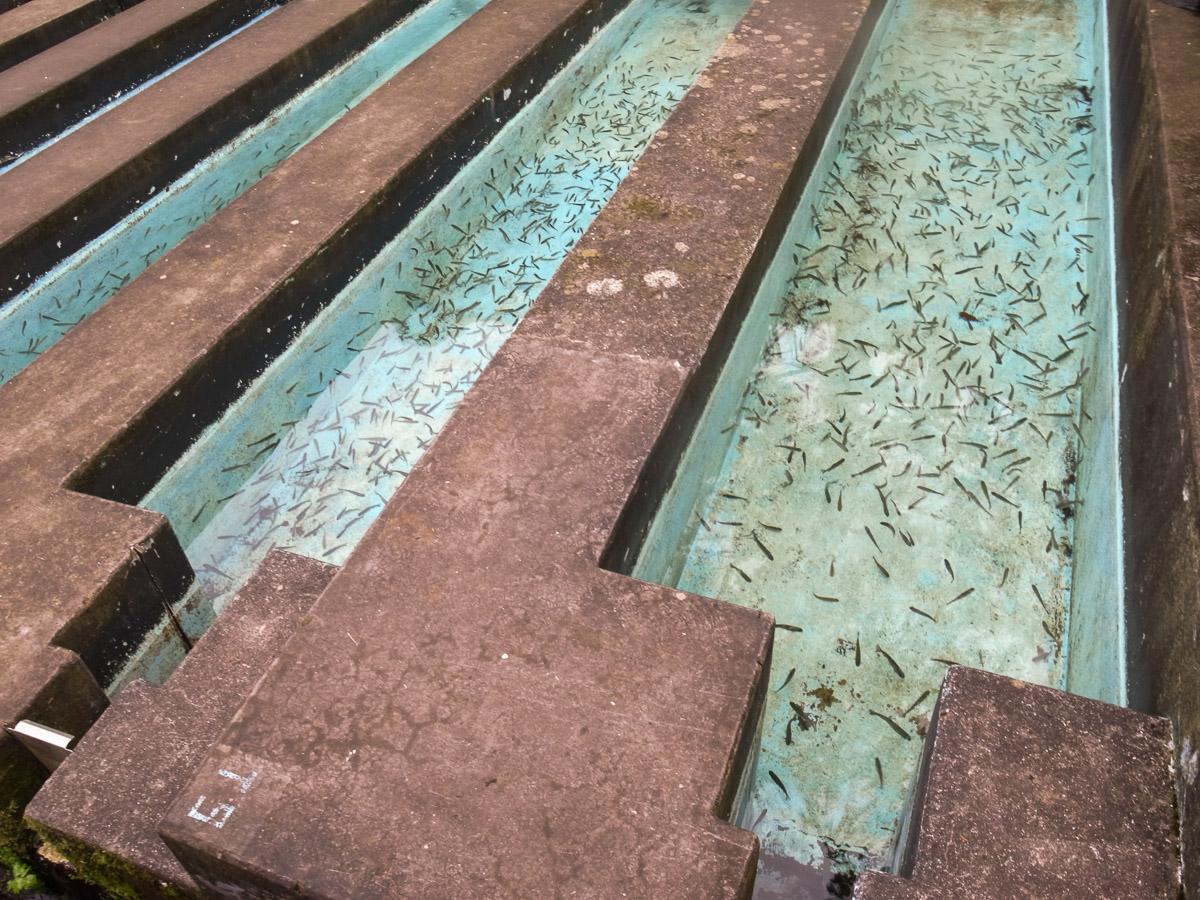 Forellenzucht in Riberio Frio