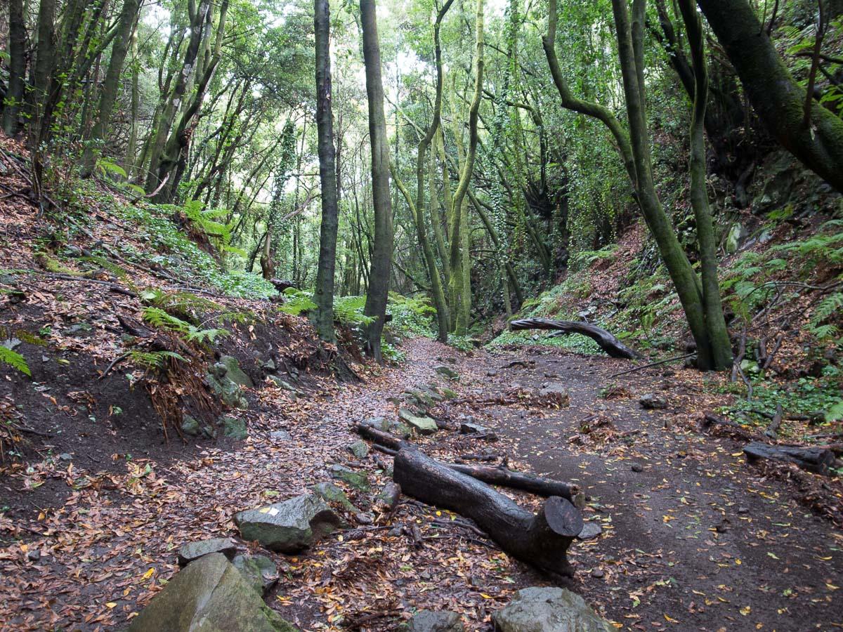 Dschungel in La Zarza